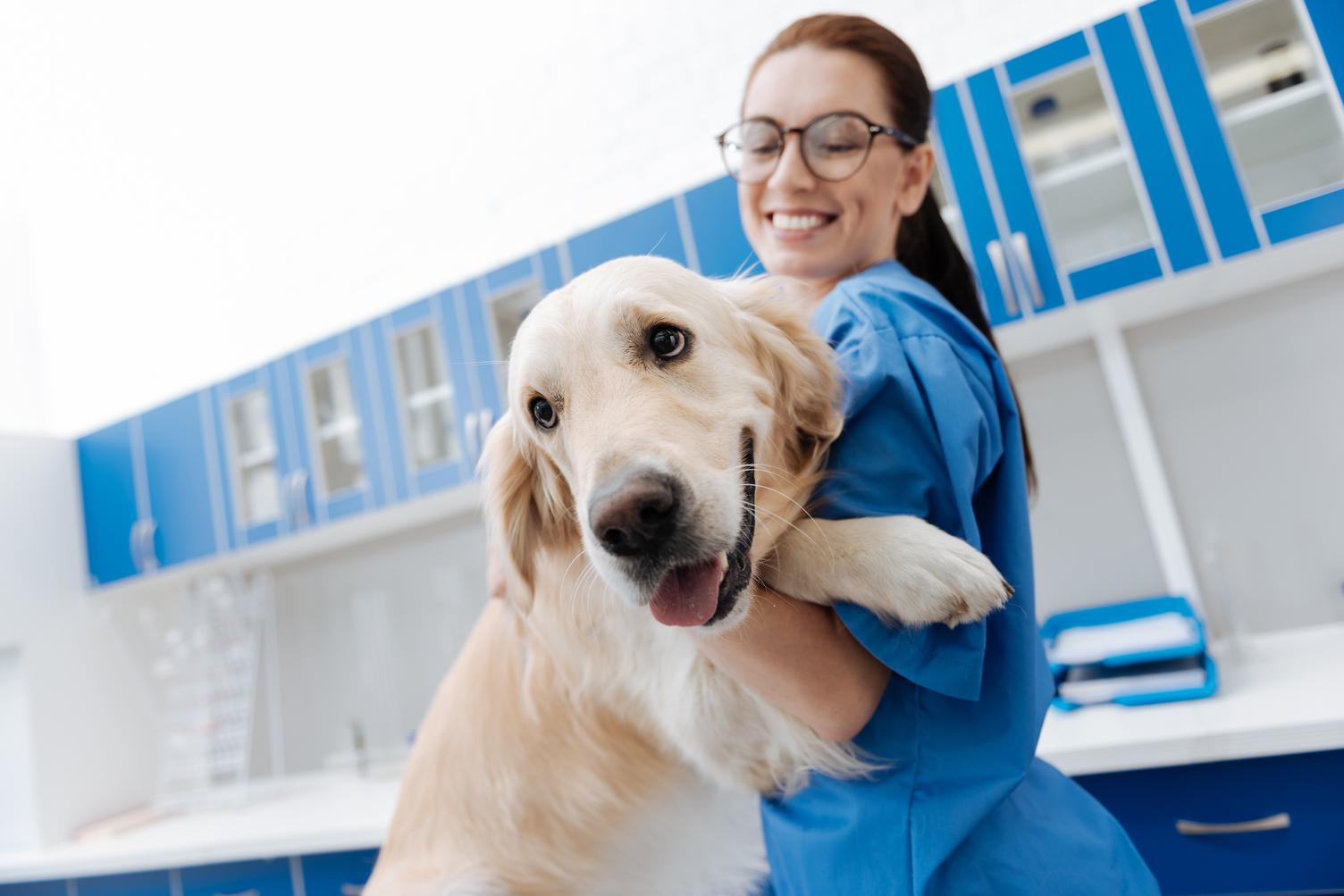 trabajar-con-un-veterinario