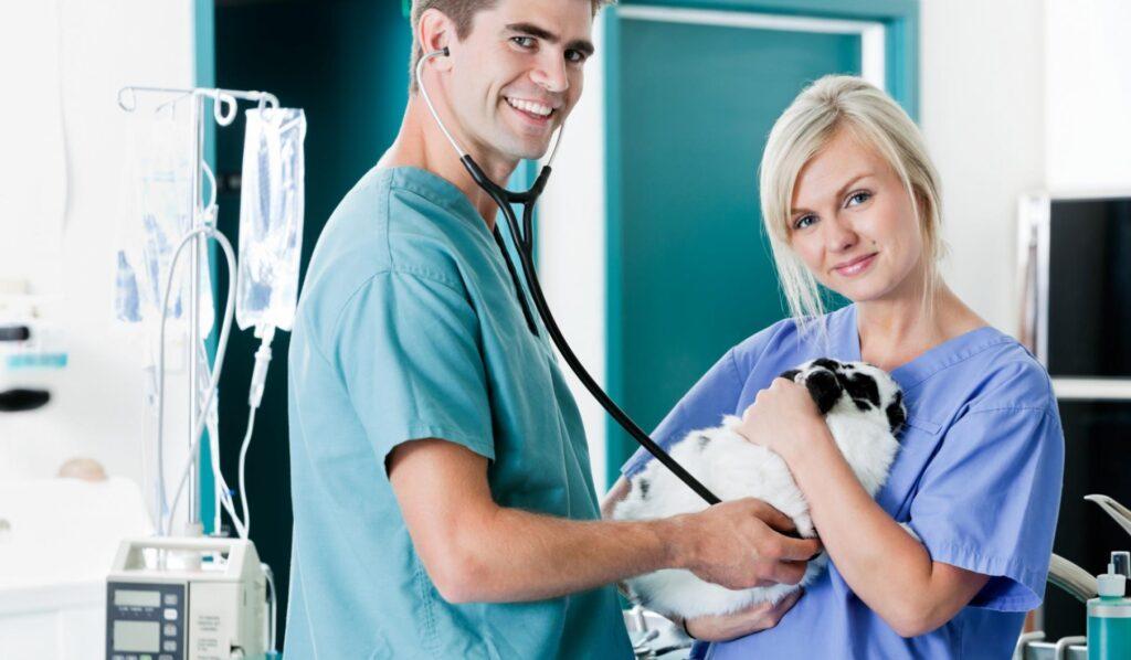 funciones-auxiliar-clinica-veterinaria